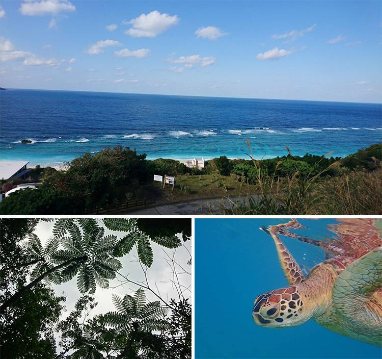 もう一度、離島医療で働きたい!10年ぶりの島ナース(北海道出身 看護師15年目)